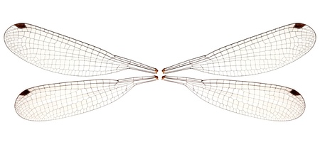 Set of four dragonfly wings may be handy for creating creatures and fairies and stuff  photo