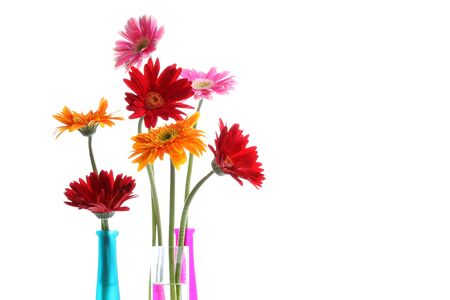 Colorful gerbers flowers isolated in round vase with copyspace  photo