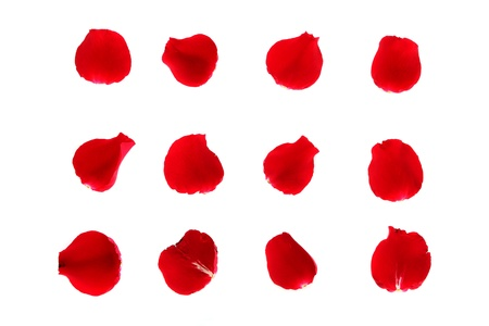 Red rose petals on the white background