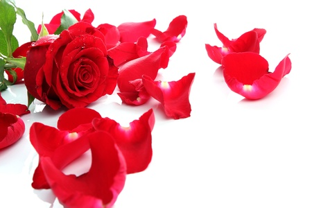 Beautiful heart of red rose petals on white background Stock Photo - 13674032