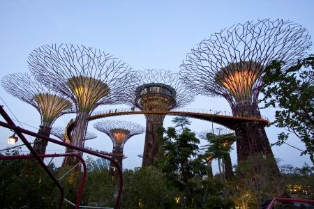 싱가포르, 싱가포르 - 2012년 9월 10일 : 싱가포르에서 베이에 의해 정원에서 Supertree 로브의 야경. 마리나 저수지에 인접한 중앙 싱가포르 매립지 101 헥타르, 스패닝.