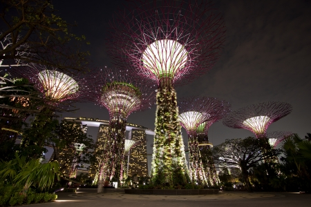 Singapore, Singapore - SEPTEMBER 10, 2012: Night view of The\ Supertree Grove at Gardens by the Bay in Singapore. Spanning 101\ hectares of reclaimed land in central Singapore, adjacent to Marina\ Reservoir.\
