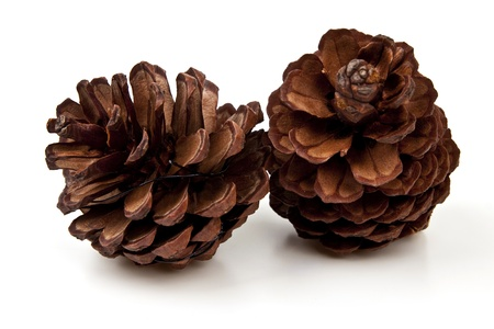 Beautiful pine cone isolated on white background photo
