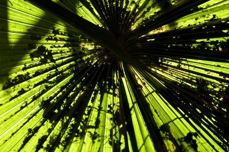 Abstract natural pattern created by palm leaf Stock Photo - 18302531
