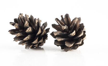 isoleted: Image of brown cones isoleted close-up