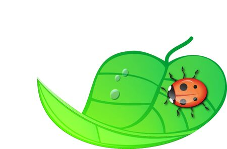 rasterized: Ladybug sitting on a green wrapped leaf. (rasterized version)