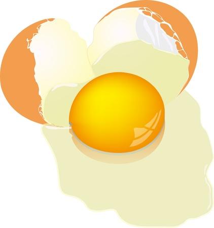 cracked egg: Broken chicken egg