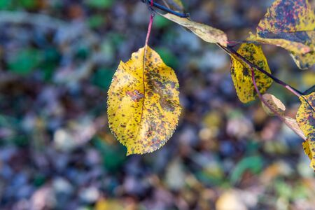 Autumn leaves on a branch lit by the sun with a blurred background. Archivio Fotografico - 131400925