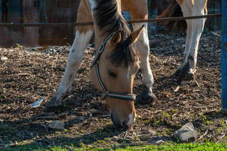 Bay horse on a farm on a sunny day.
