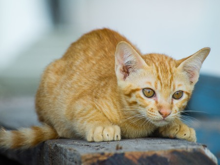 carefully: Cute kitten sitting down to look carefully. Stock Photo