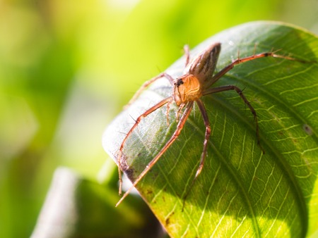 sunligh: Spider on a green leaf under sunligh.