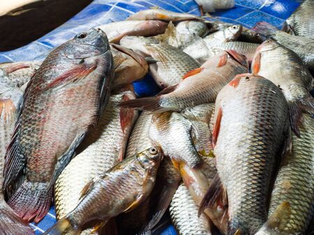 freshwater fish: Freshwater fish that were captured for sale.