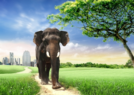 city trip: Elephant back to the wild  concept