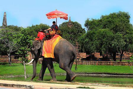 cabeza de buda: Ayutthaya templo destruido y el elefante con los turistas