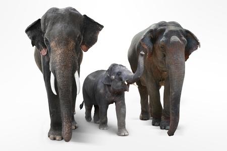 three animals: Elephant padre e madre con il bambino elefanti a piedi su sfondo bianco