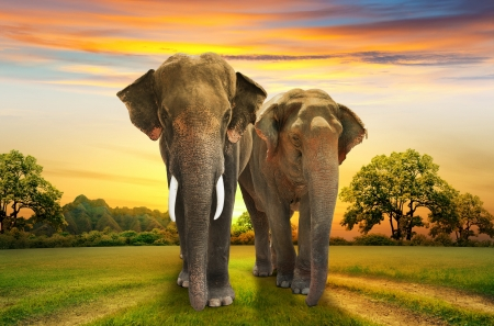 elephants family on sunset