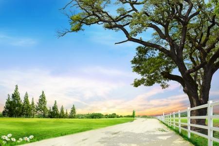 감소의 자연 컴포지션에 나무 근처 도로 스톡 콘텐츠
