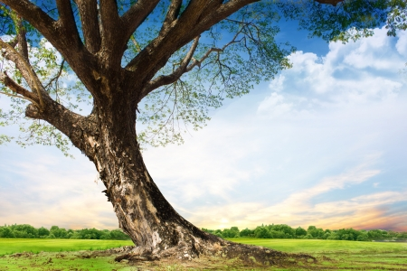 tall tree: Spring meadow with big tree with fresh green leaves