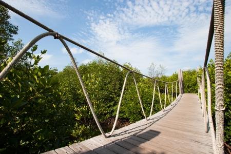 rope bridge: Hanging bridge in the forest Stock Photo