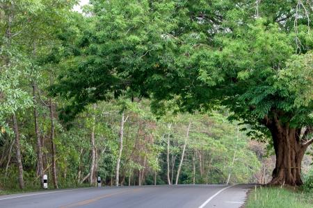 tamarindo: Hermoso camino con árboles de tamarindo en tailandia, carretera rural Foto de archivo