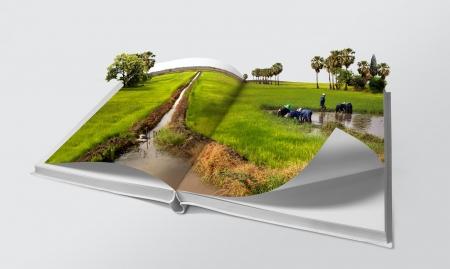 Open boek in groene rijstvelden Stockfoto