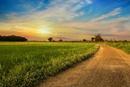 녹색 쌀 필드에 시골 길