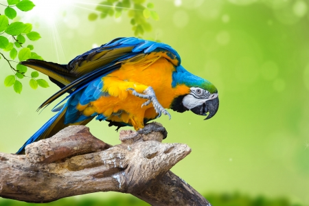 blue parrot: natural green background with Parrot Macaw