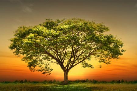 nature landscape: Green tree nature landscape