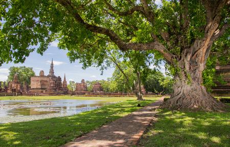 banyan tree: Braided roots of large banyan tree in Sukhothai Historical Park, Thailand
