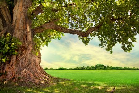 新鮮な緑の葉の大きな木と春の牧草地
