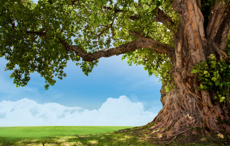 Spring meadow with big tree with fresh green leaves Standard-Bild