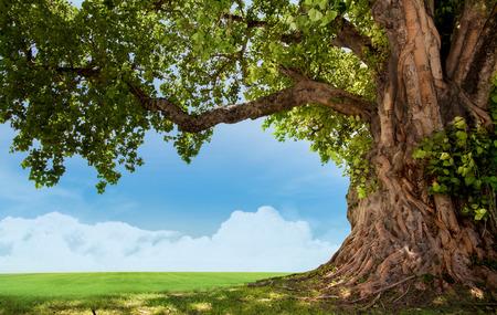 groene boom: Lente weide met grote boom met verse groene bladeren