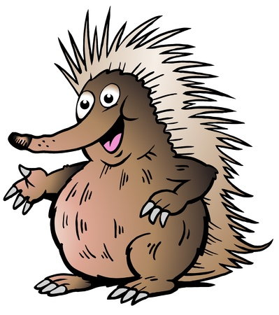Hand-drawn Vector illustration of an Echidna Vector