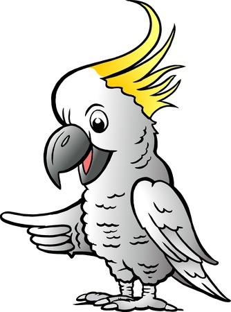 Hand-drawn illustration of an Sulphur Crested Cockatoo Illustration