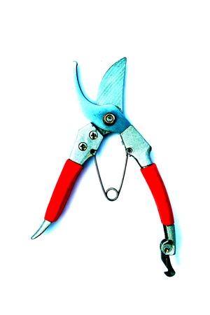 poignant: Scissors cut tree