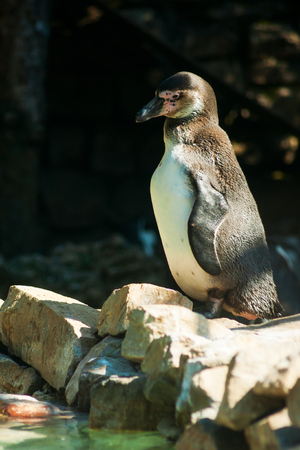 webbed: Penguin to the zoo