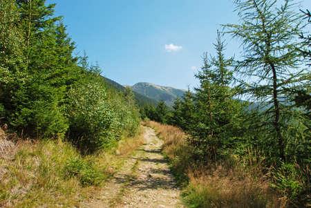 Trekking in Krkonose mountains, national park, Czech republic photo