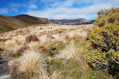 tongariro: Trekking in Tongariro national park, New Zealand