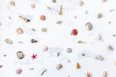 Marine composition. Sea shells, sea star on white background. Flat lay, top view