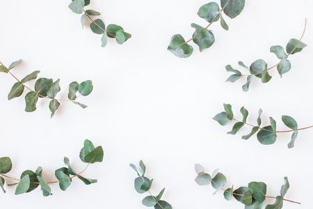 Eukalyptus. Rahmen aus Eukalyptuszweigen. Flache Lage, Draufsicht
