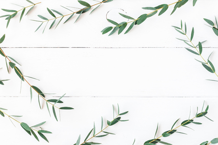 Eucalyptus on wooden white background. Frame made of eucalyptus branches. Flat lay, top view Stock Photo