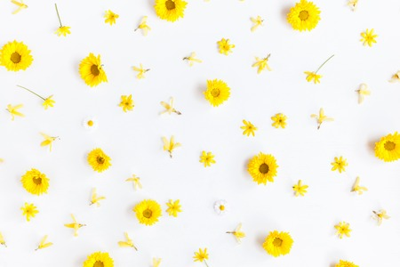 Flowers composition. Pattern made of chrysanthemum flowers on white background. Flat lay, top view Фото со стока