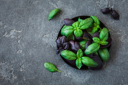 Basil in the plate. Fresh different basil on black background. Flat lay, top view