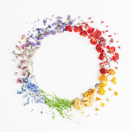 Blumen Zusammensetzung. Der Kranz, der vom Regenbogen gemacht wird, blüht auf weißem Hintergrund. Flache Lage, Draufsicht