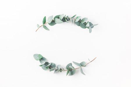 Eukalyptus auf weißem Hintergrund. Kranz aus Eukalyptus-Ästen. Flache Lage, Draufsicht, Kopie Raum