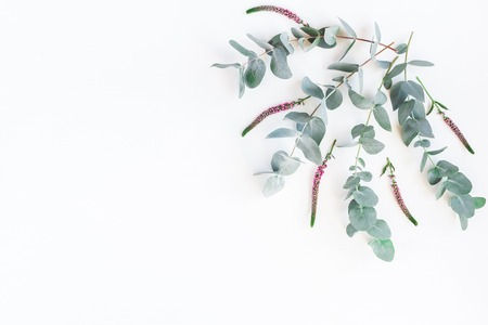 Flowers composition. Floral frame made of pink flowers and eucalyptus branches on white background. Flat lay, top view, copy space Stock Photo