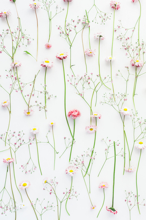 Flowers composition. Pattern made of pink gypsophila flowers and daisy flowers on white background. Flat lay, top view