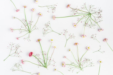 Pattern made of pink gypsophila flowers and daisy flowers on white background. Flat lay, top view Stock Photo