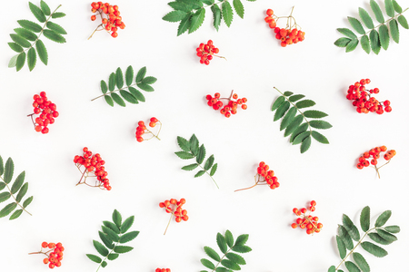 Autumn composition. Pattern made of rowan berries on white background. Autumn, fall concept. Flat lay, top view
