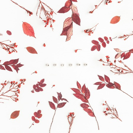 秋季構圖。字秋天,紅色的花朵和葉子在白色背景上。平躺,頂視圖,廣場